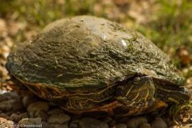 Geheimtipp für Ausflug in Texas – Hagerman National Wildlife Refuge