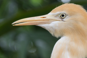 Video: Kuala Lumpur Vogelpark Bird Park in Malaysia