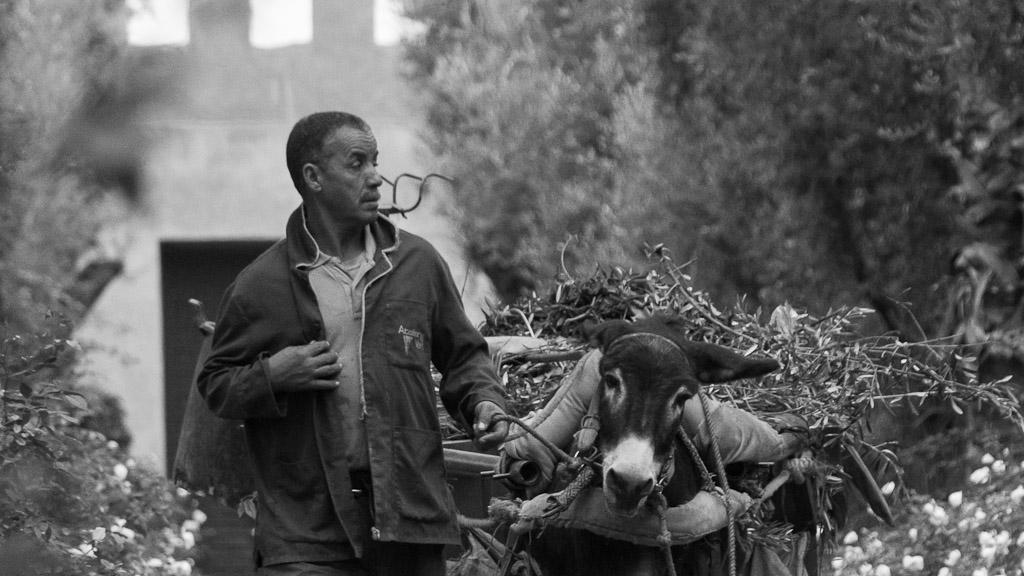 Artikel Reise In Die Rote Rosa Stadt Marrakesch In