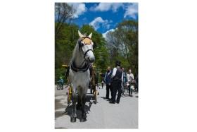 Foto Der Woche – Pferd beim Englischen Garten in München in Bayern Deutschland