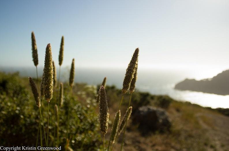 Article: 20 Affordable Enjoyable San Francisco Activities Part 3
