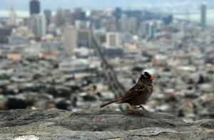 Bird At Twin Peaks