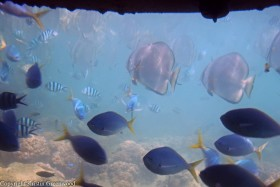 Photo Of The Week – Fish at The Great Barrier Reef in Queensland Australia