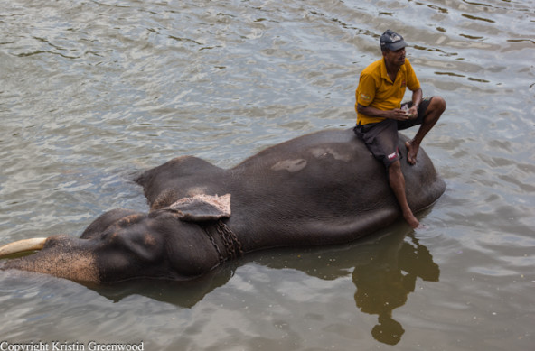 Photo Of The Week – Elephant Furniture Pinnawala Elephant Orphanage