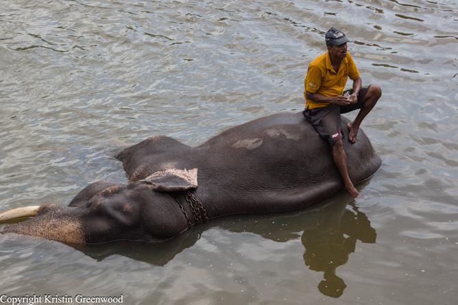 Photo Of The Week U2013 Elephant Furniture Pinnawala Elephant Orphanage | |  YesNomads