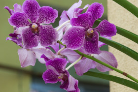 Video: The Orchid Garden in Kuala Lumpur KL