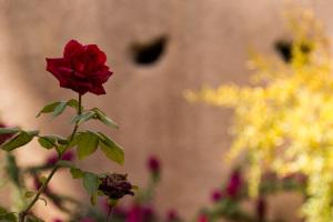 City Walls & Flower