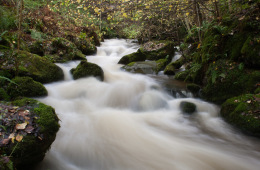 Photo Of The Week – The Dollar Burn in Scotland along the beautiful Dollar Glen