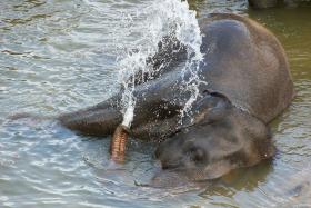 Video: Pinnawala Elephant Orphanage in Sri Lanka