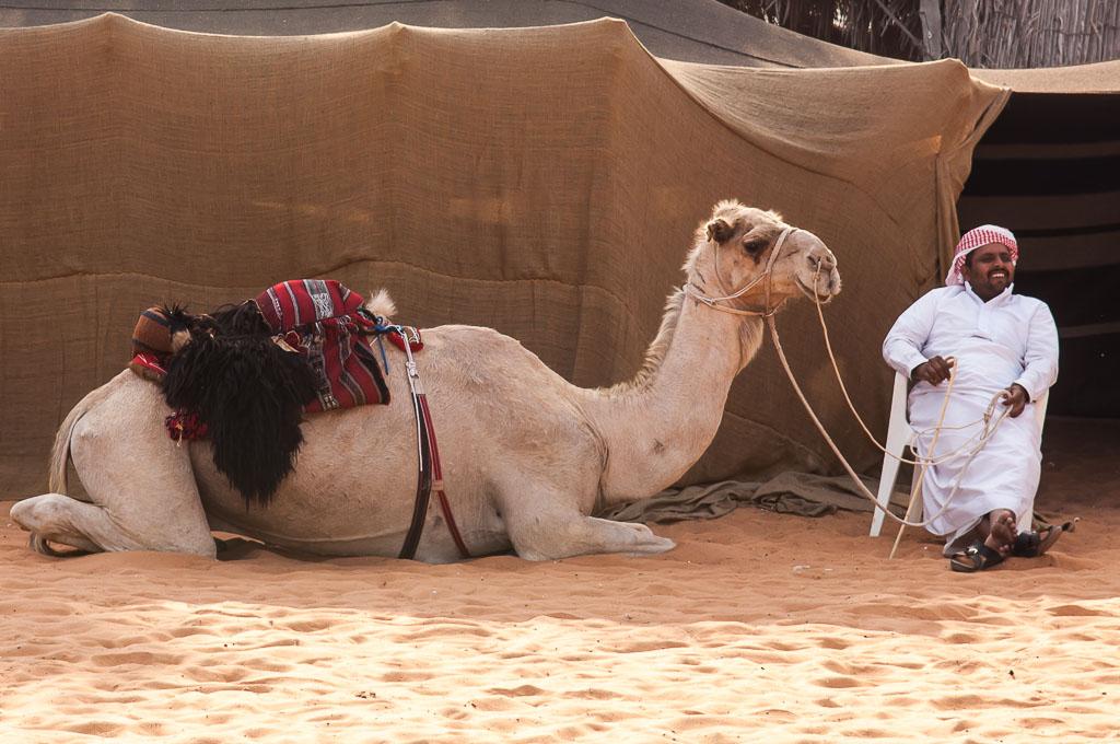 Camel Abu Dhabi Heritage Village