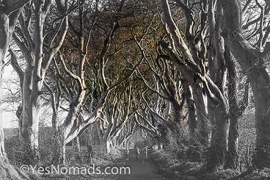 Photo of the Week – The Dark Hedges in Northern Ireland