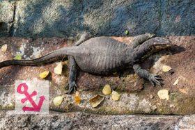 Video: Giant Lizard Singapore GP 2016 P3