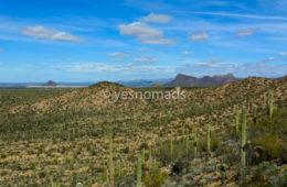 Photo Of The Week – Saguaro National Park in Tucson Arizona
