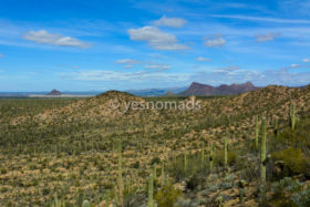 Photo Of The Week – Saguaro National Park in Tucson Arizona