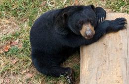 Video: Visit Johor Bahru Zoo in Malaysia